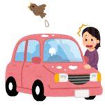 【ボンネットの鳥フンを放置したらダメ】車の塗装には大ダメージ。洗車機をかけてもいいの?