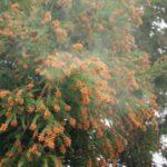 【車のボディにこびりついた花粉を除去する目からウロコの方法】花粉によるシミの対策法